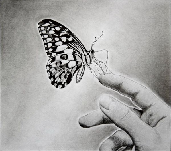 Butterfly on hand drawing