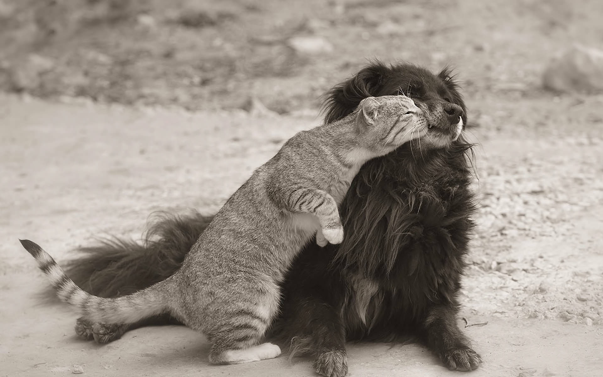 Cat & Dog Black & White Wallpaper