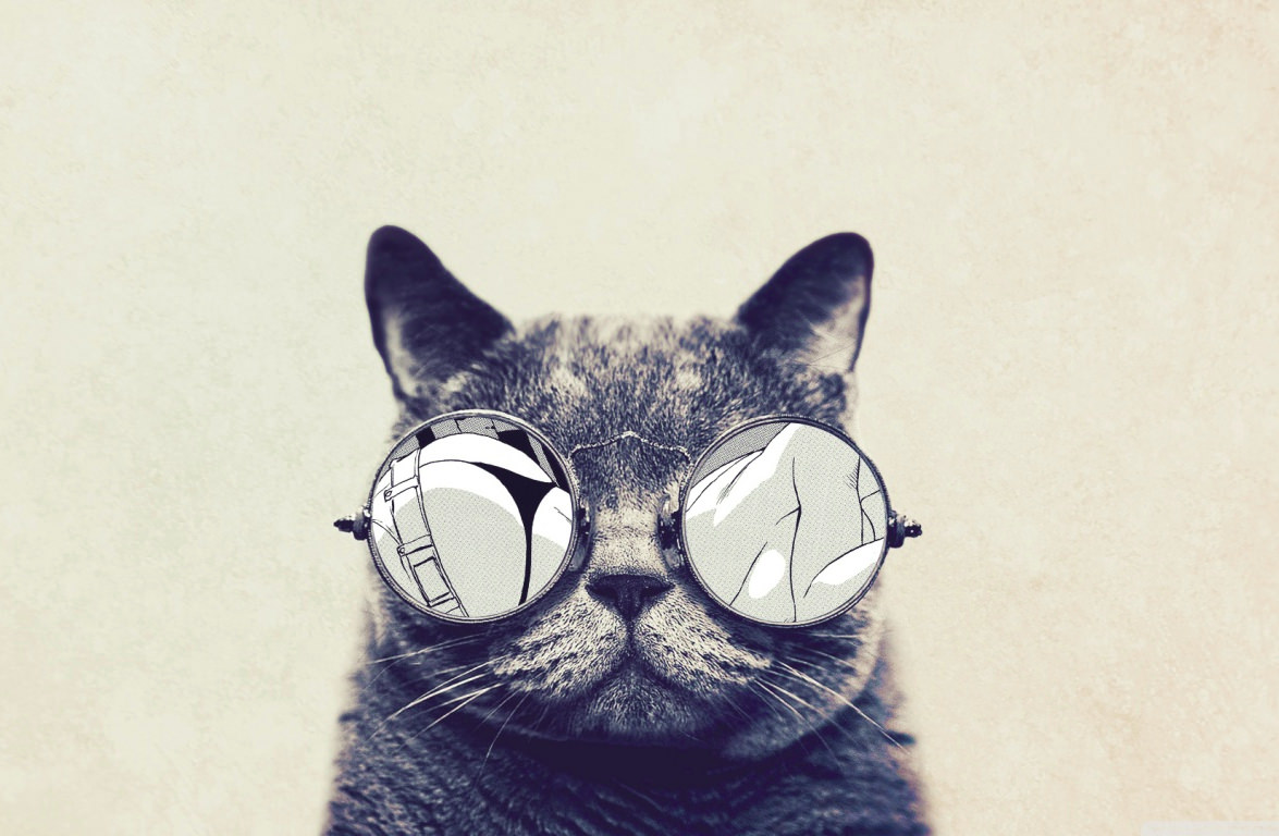 Cat with Goggles Funny Wallpaper