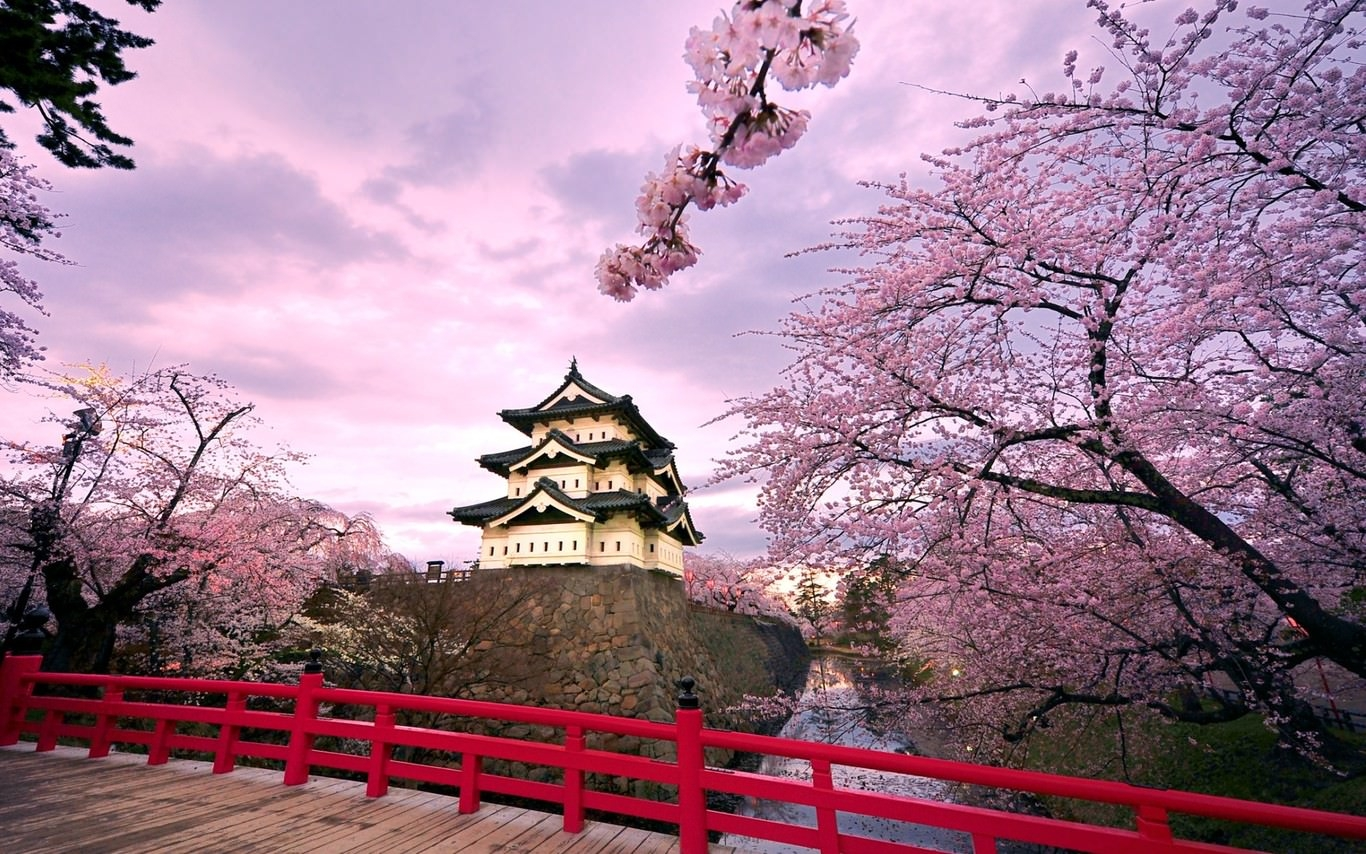 Cherry Blossom Colorful Wallpaper