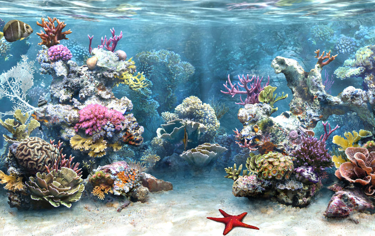 photograph relating to Aquarium Backgrounds Printable known as 25+ Aquarium Backgrounds Wallpapers FreeCreatives
