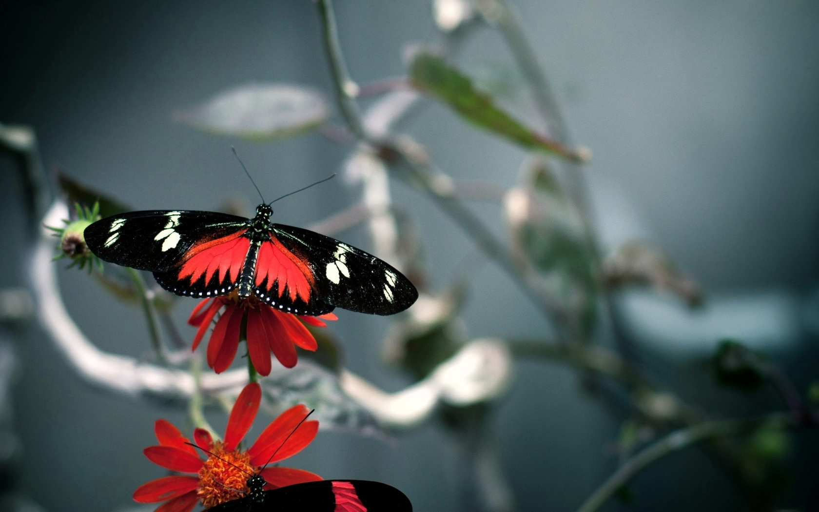 Cool Butterfly Wallpaper