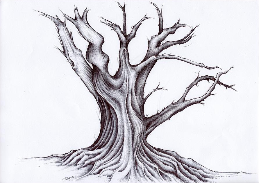 Beau Cool Tree Drawing