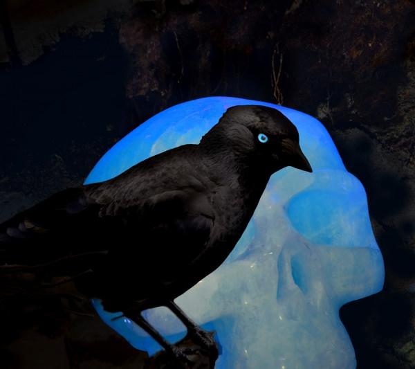Crow Bird Crystal Wallpaper