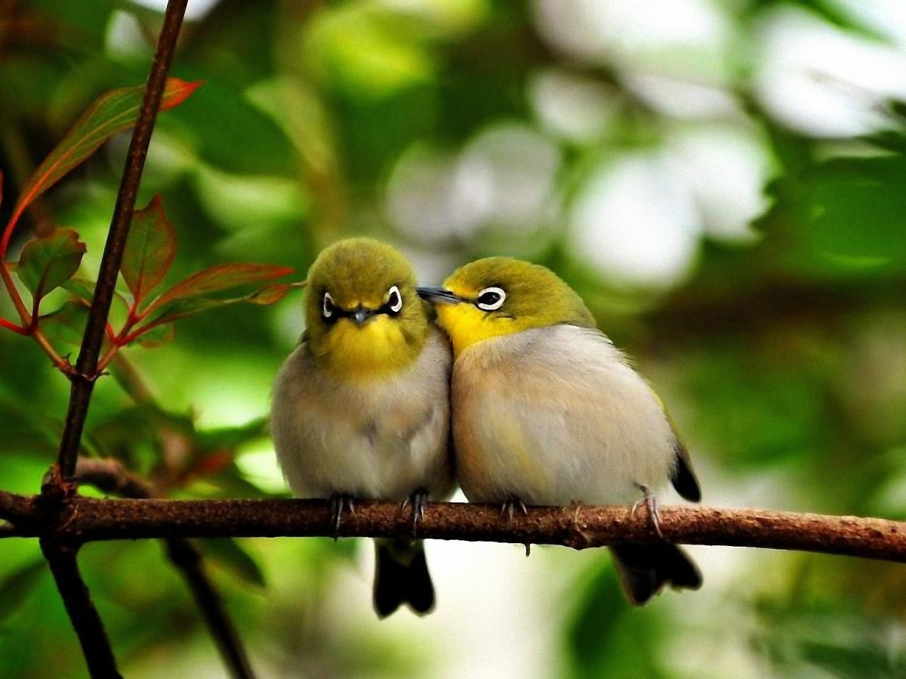 Cute Little Birds Background