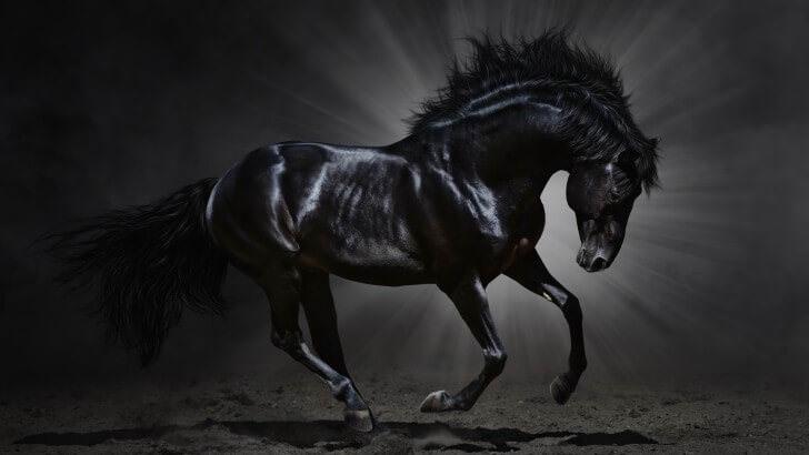 Dark Horse Wallpaper