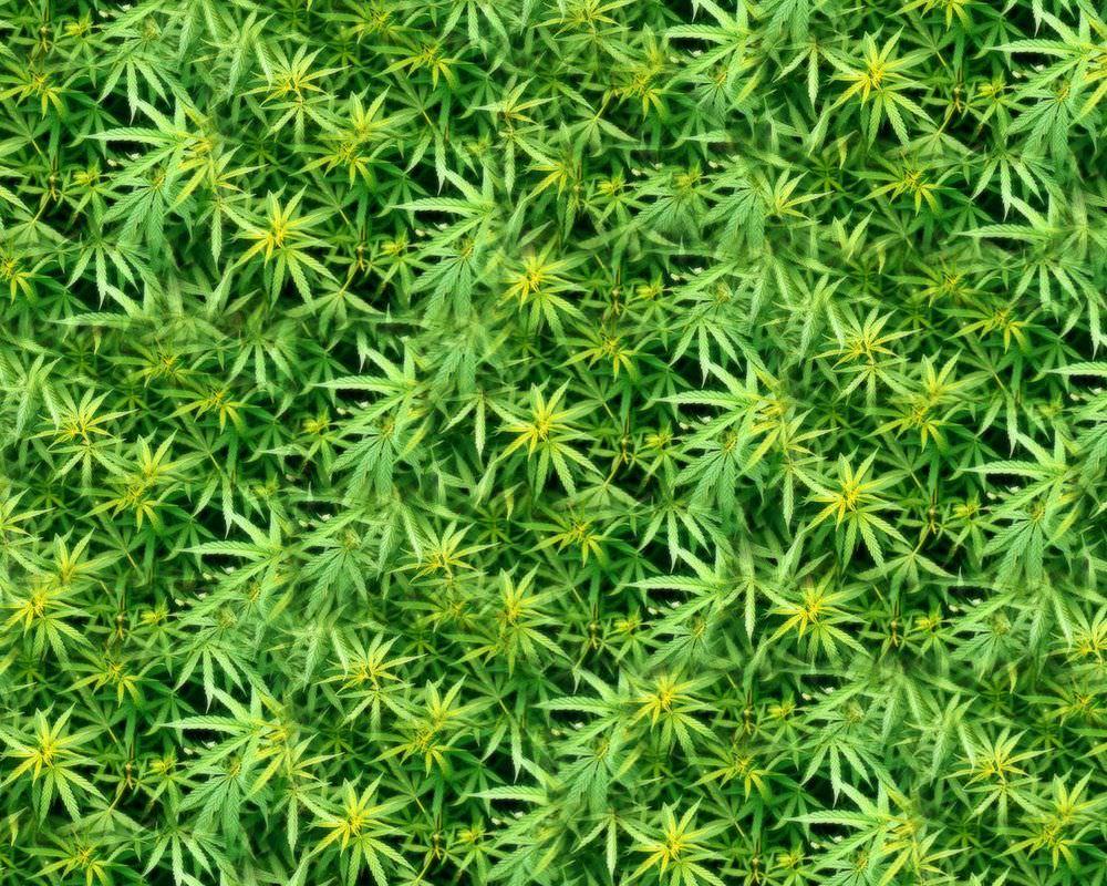 Desktop Weed Wallpaper