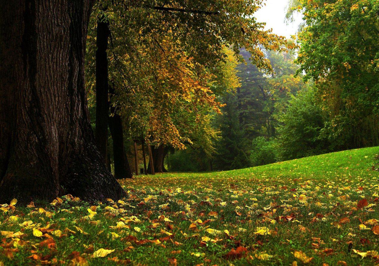 Download Fall Wallpaper