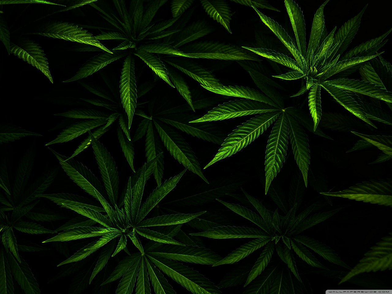popular weed wallpapers - photo #23