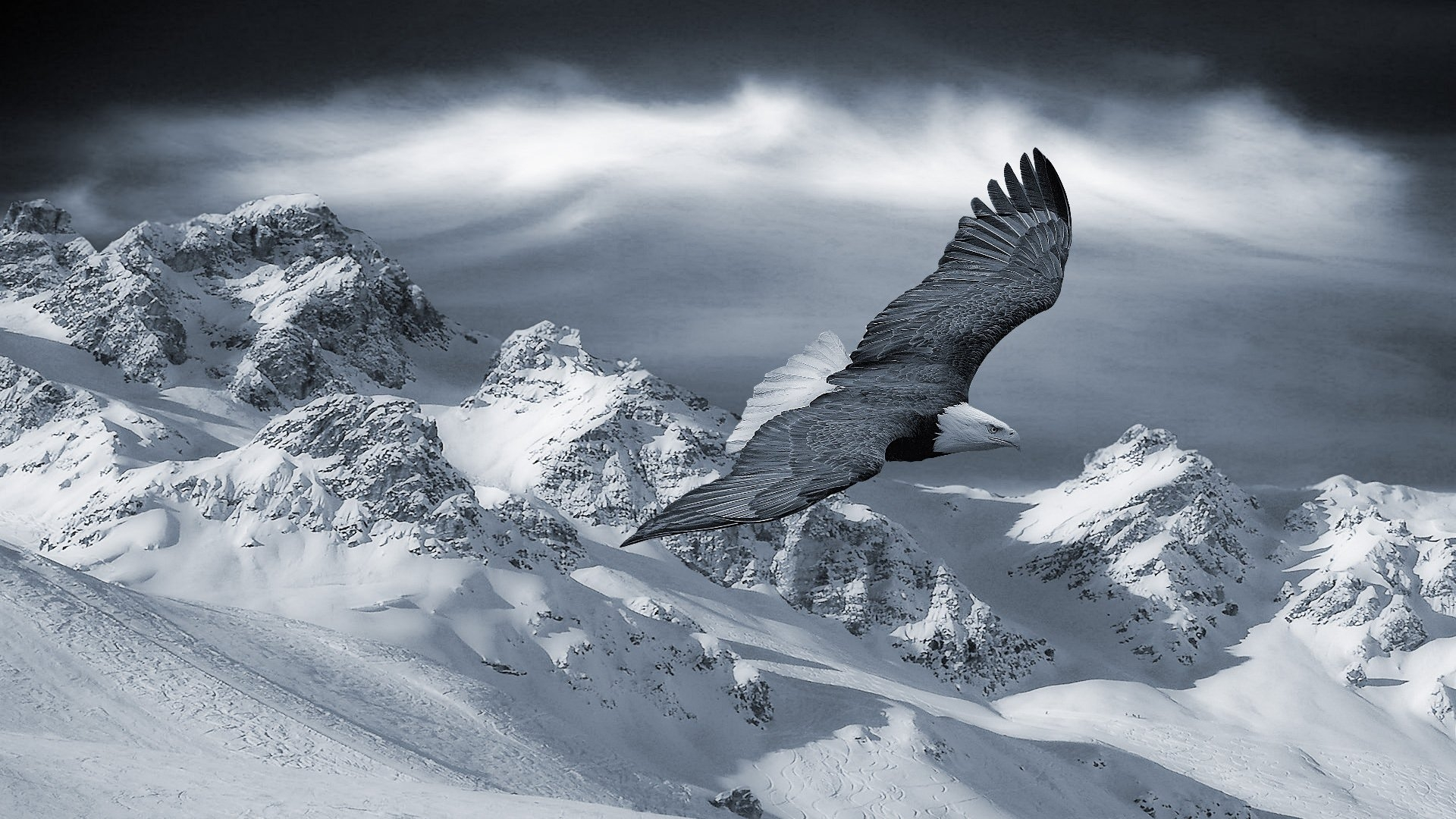 Eagle On Snow Wallpaper