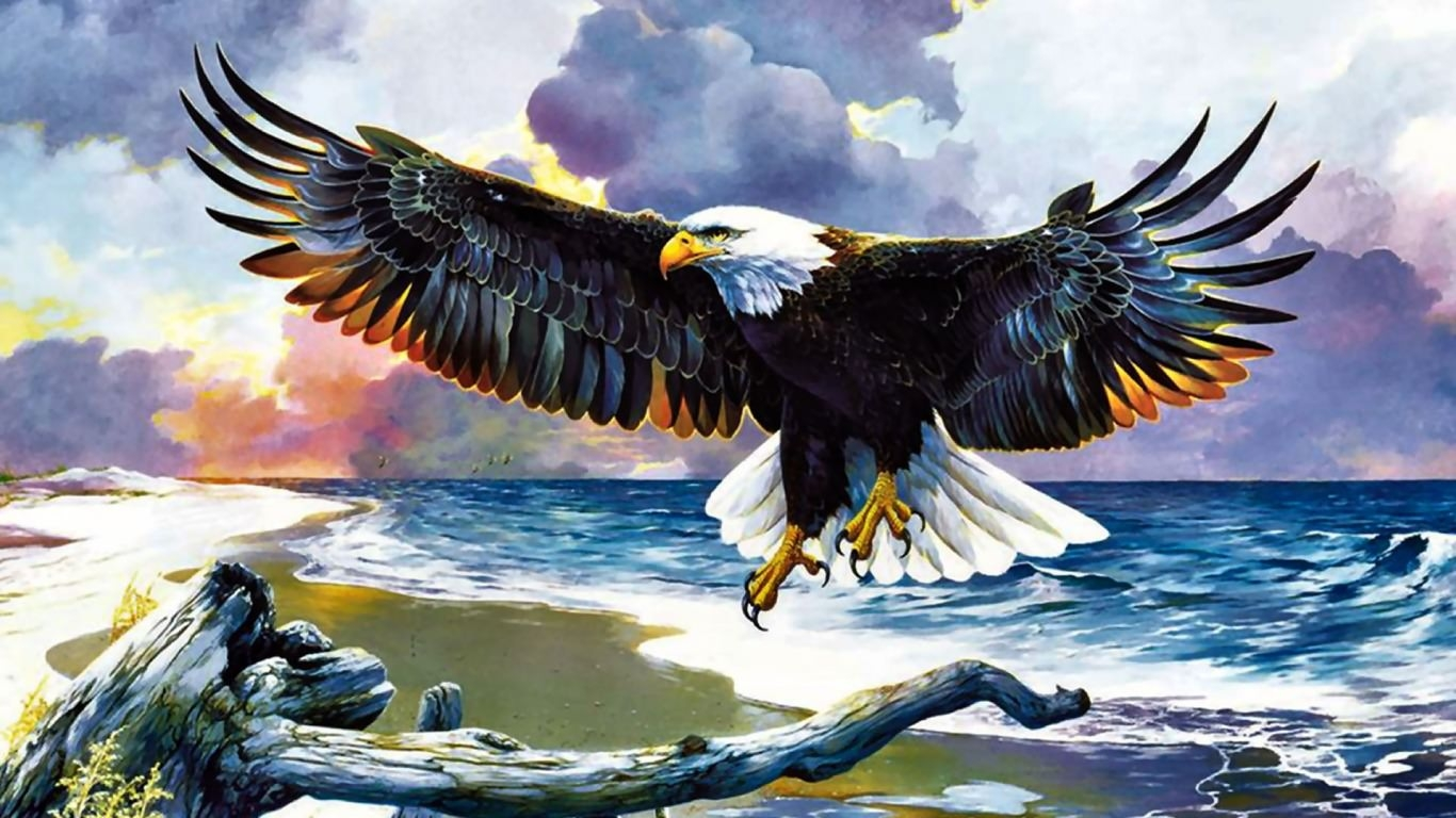 Eagle On The Shore Wallpaper