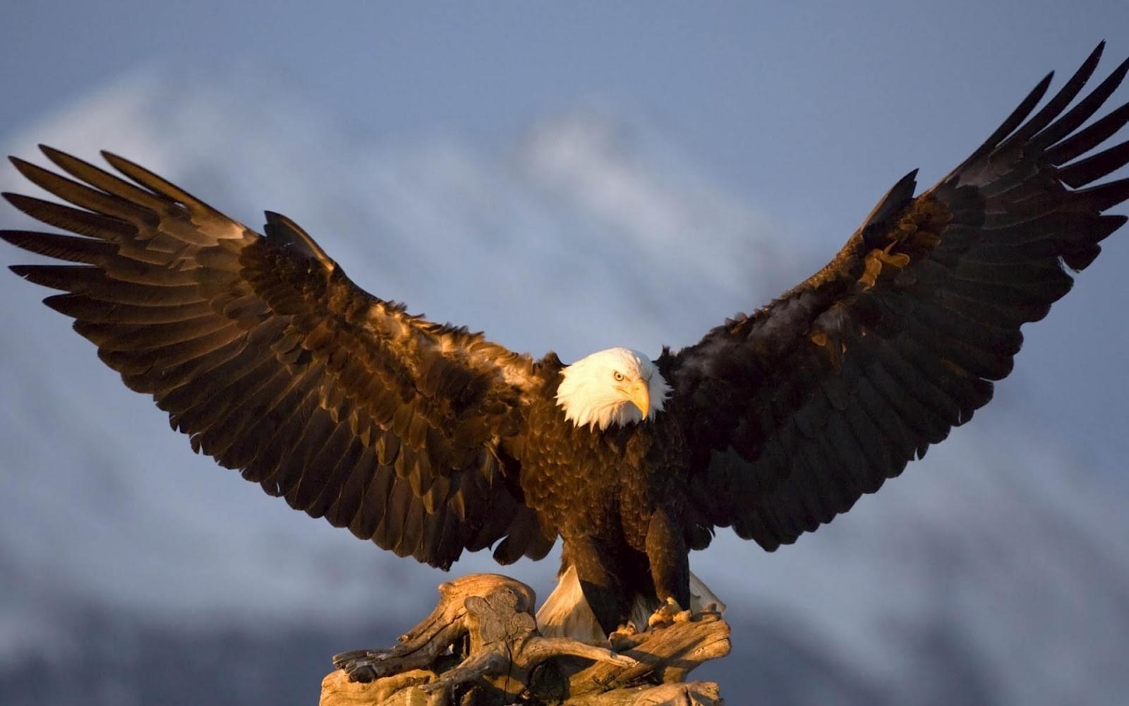 Eagle Spreading Wings Wallpaper