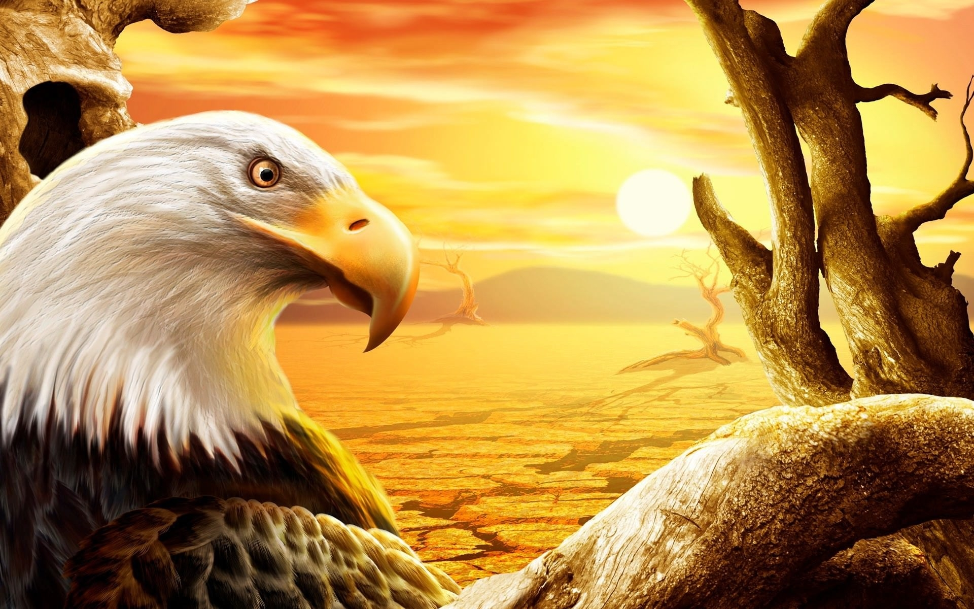 Eagle Wallpaper For You