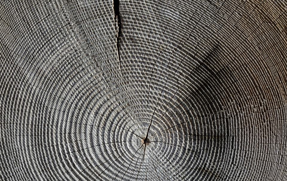 Elegant Tree Rings Texture