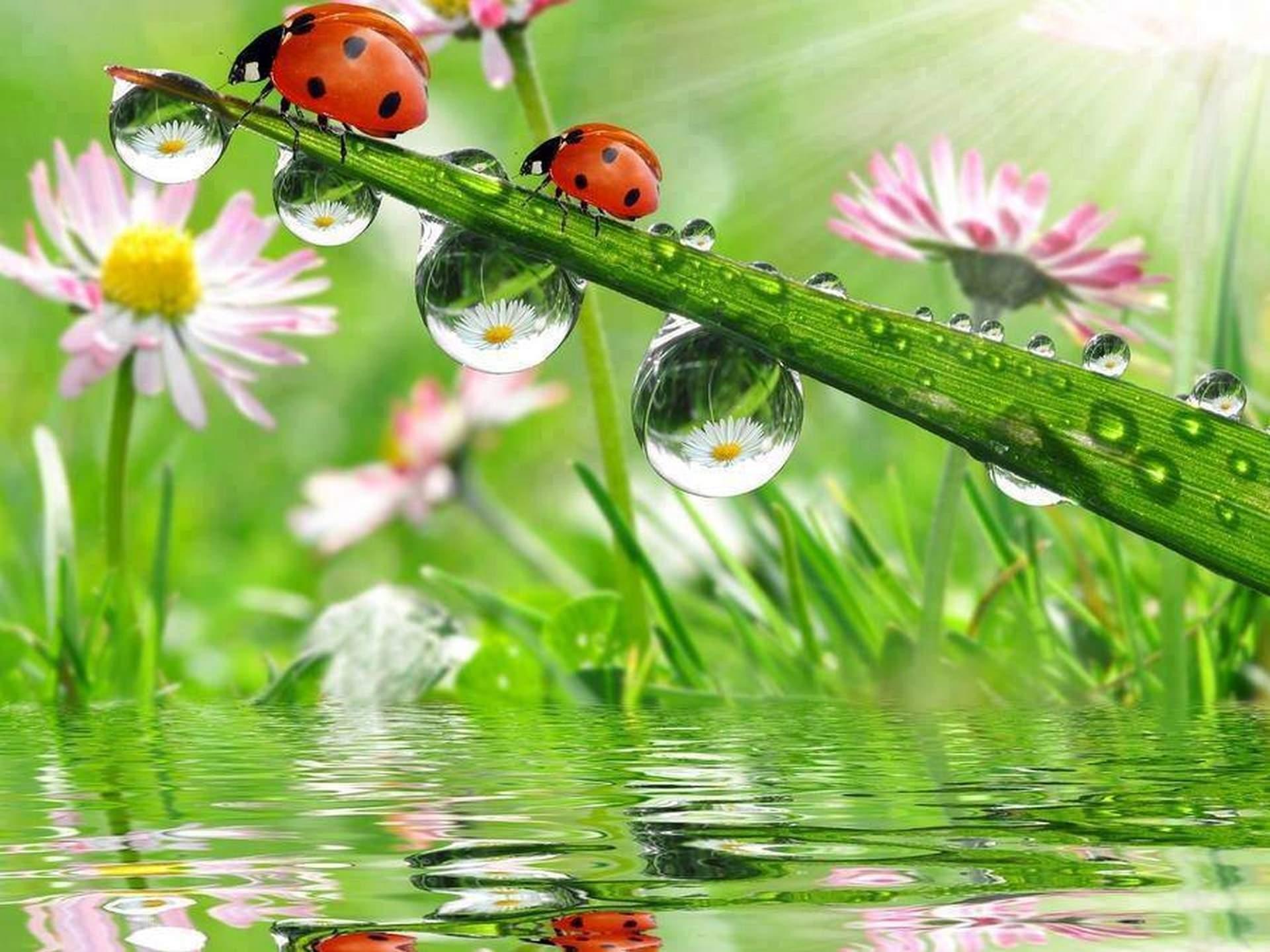 Excellent Ladybug Wallpaper