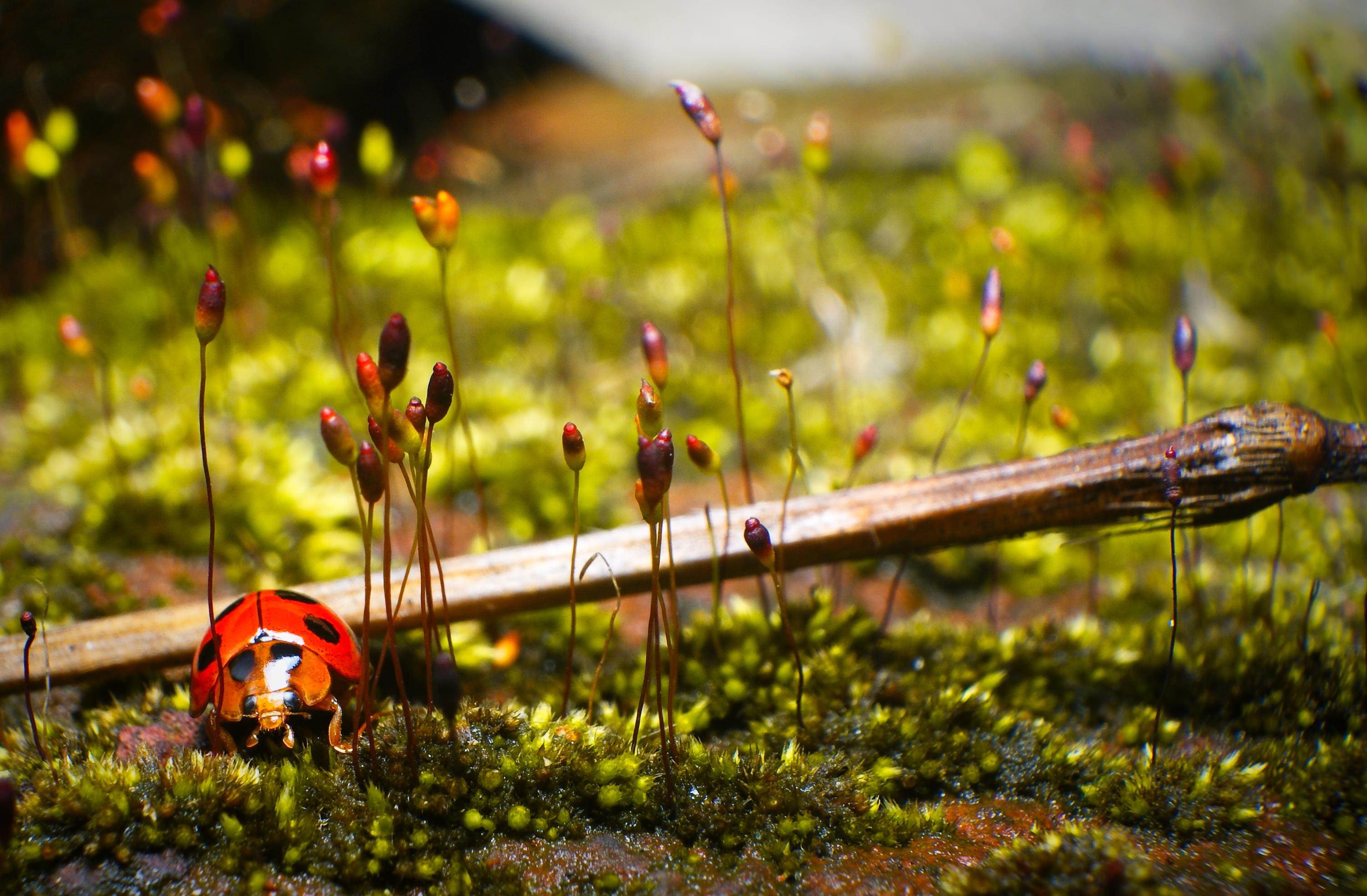 Extraordinary Ladybug Wallpaper