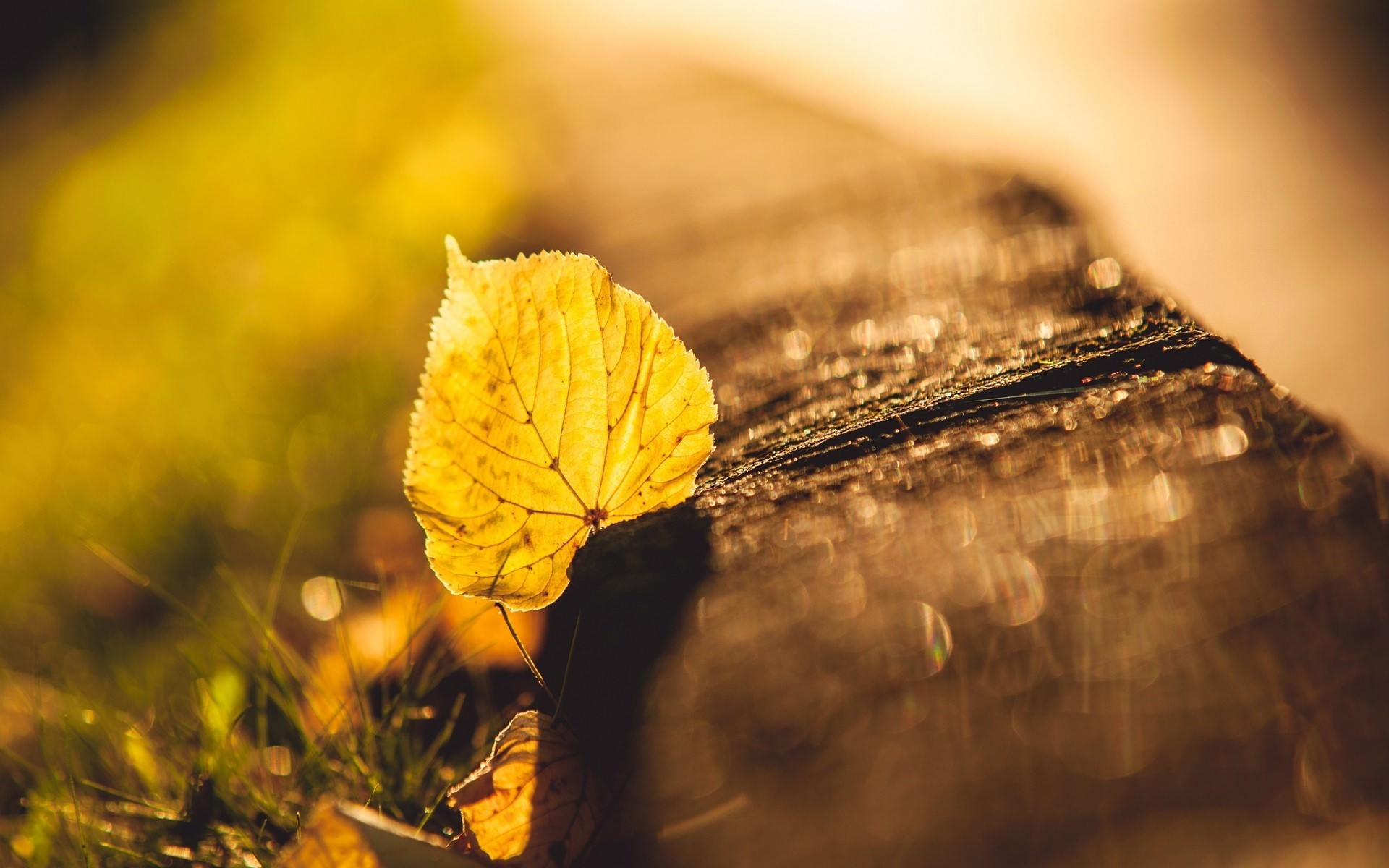 FAllen dry Leaf Background