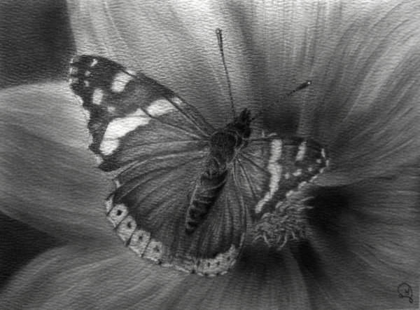 Fabulous Butterfly Pencil Drawing