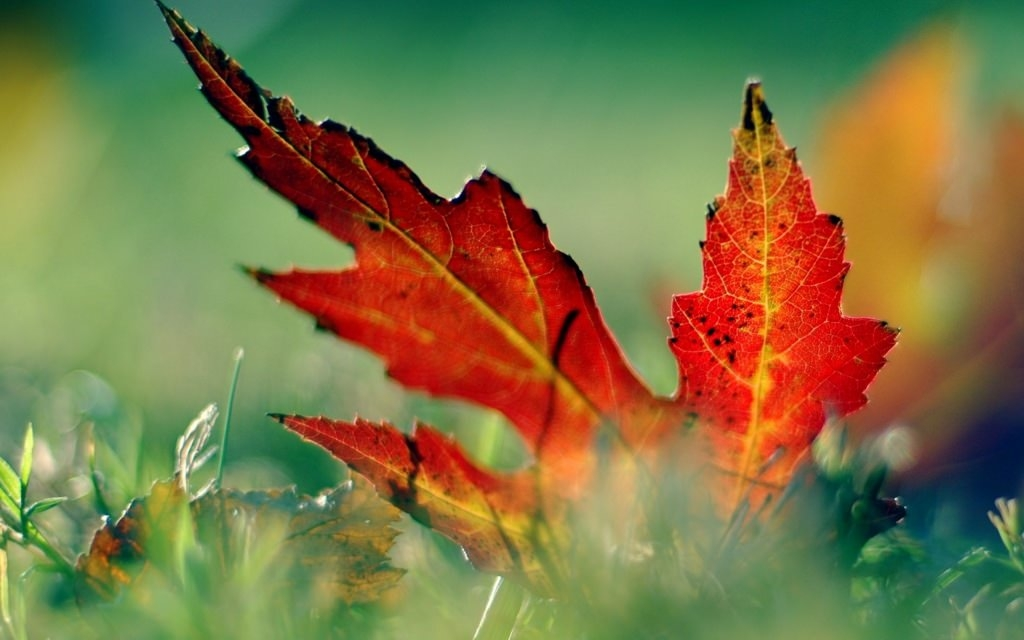 Fall Leaf HD Wallpaper