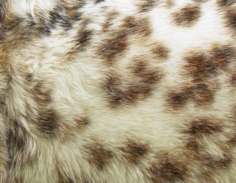 Fantastic Animal Fur Texture