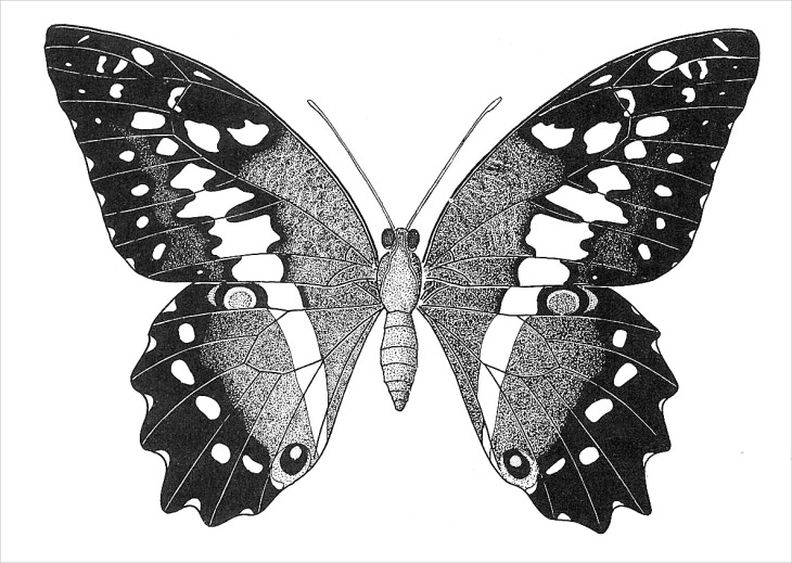 Fantastic Butterfly Drawing