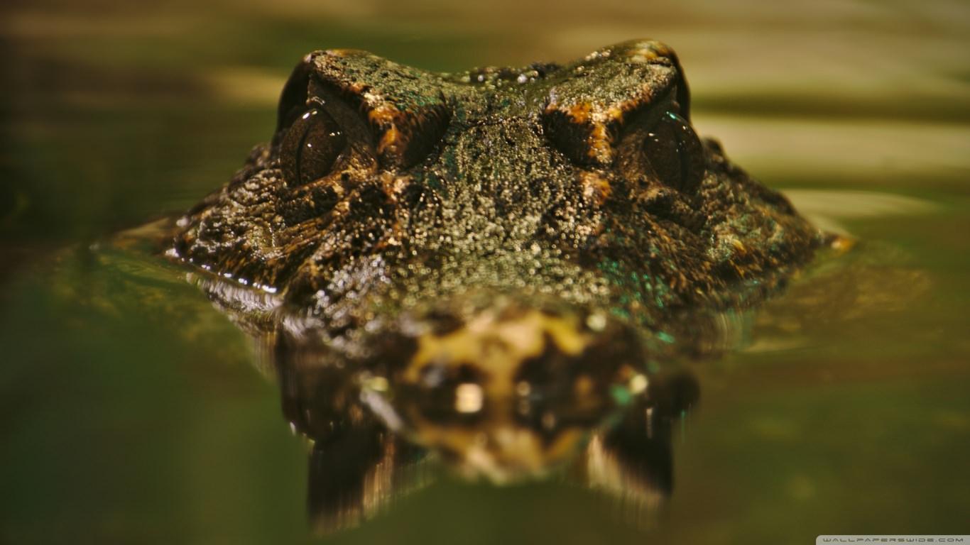 Fantastic Crocodile Wallpaper