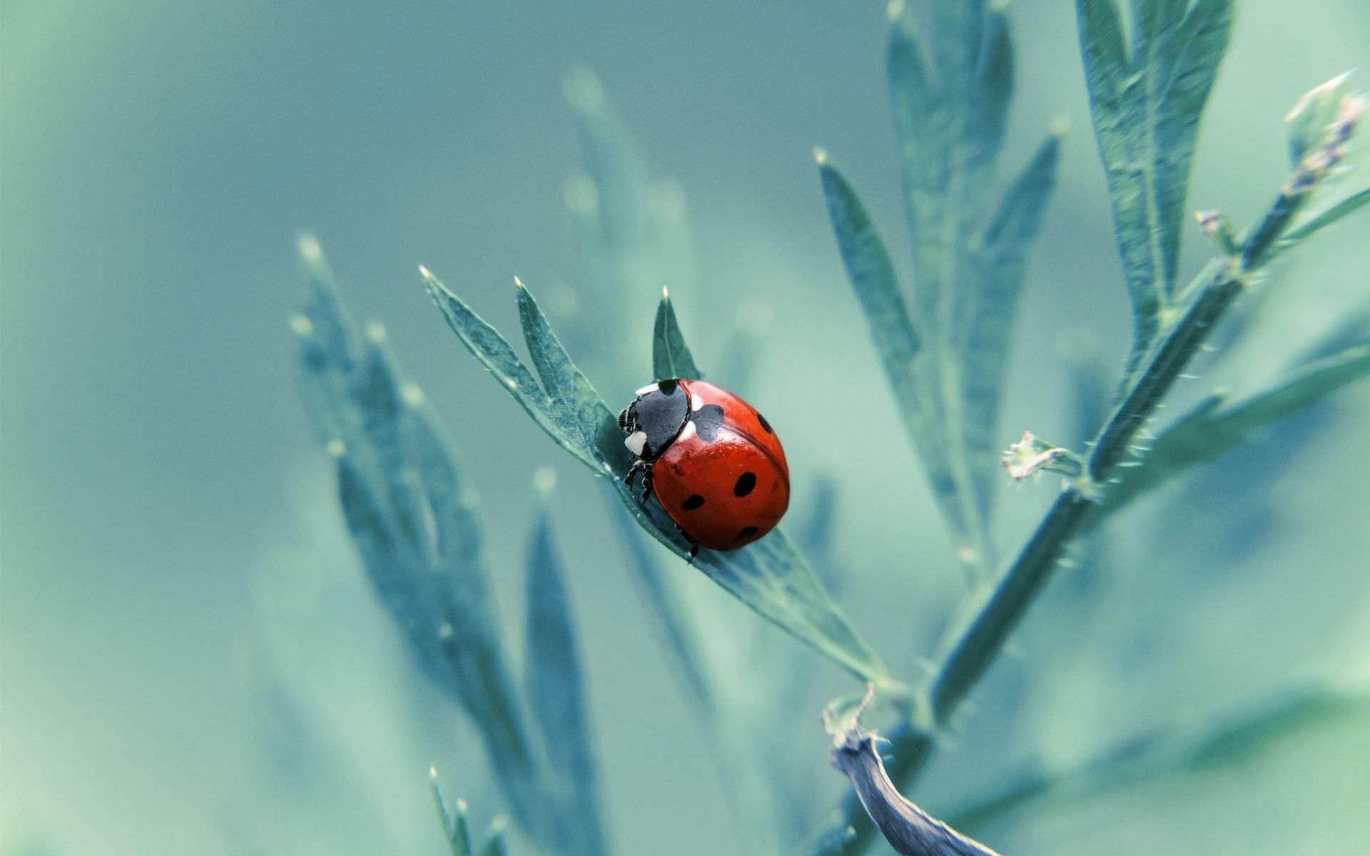 Fantastic Ladybug Wallpaper