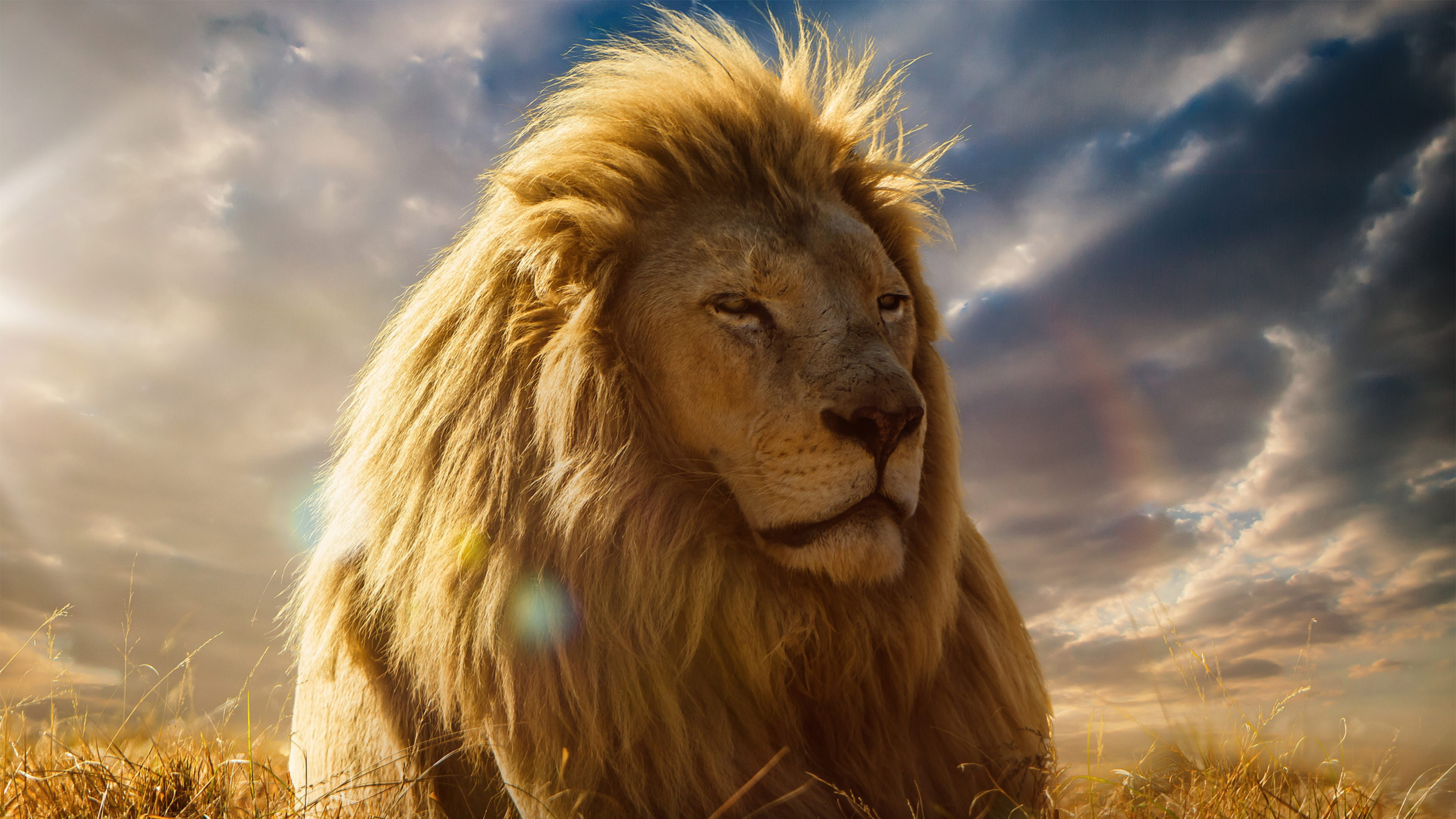 21 Lion Wallpapers Backgrounds Images Freecreatives