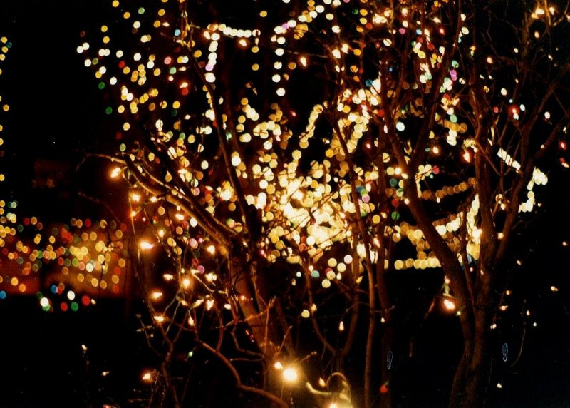 Fantastic Twinkle Lights Photography