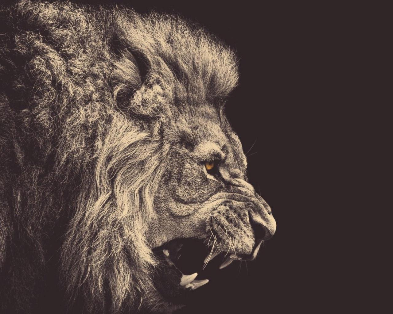 Ferocious Lion Wallpaper
