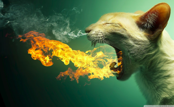 Flaming Cat Funny Wallpaper