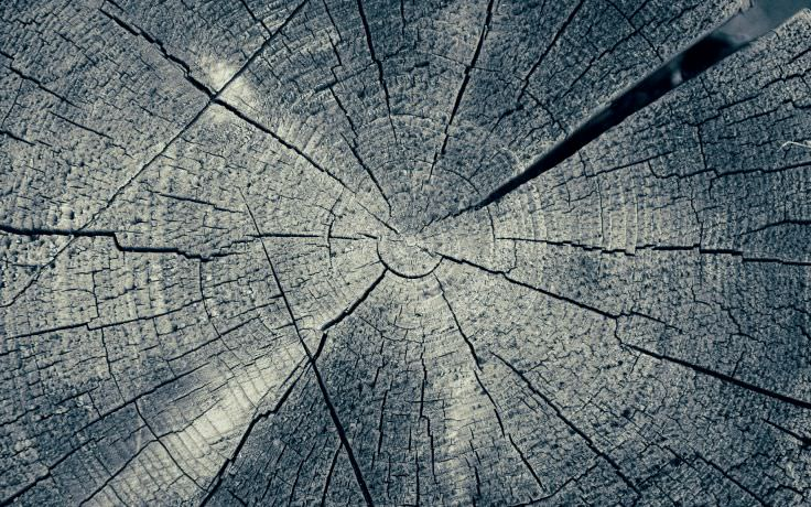 Flat Tree Rings Texture
