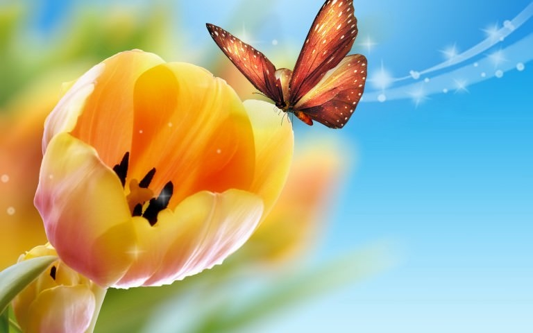 Flower With Butterfly Wallpaper