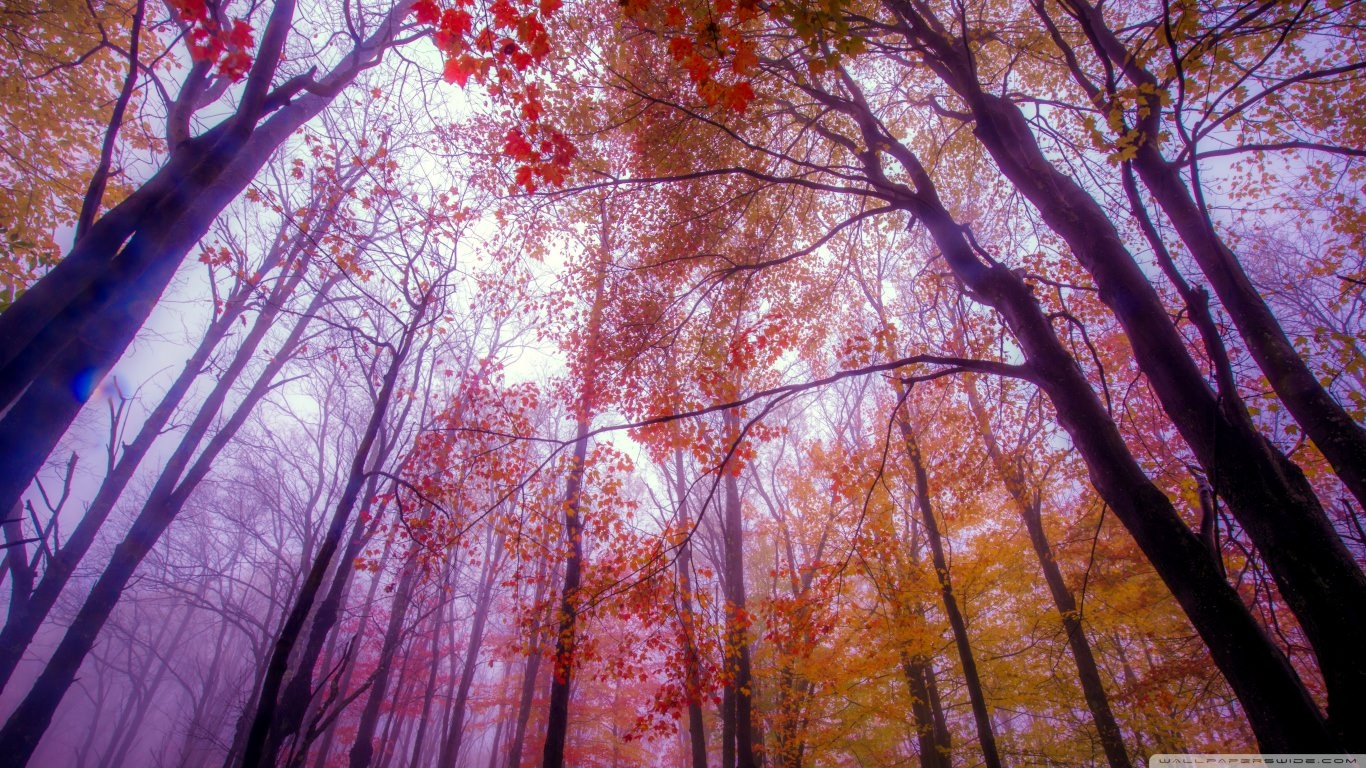 Foggy Colors Autumn Wallpaper