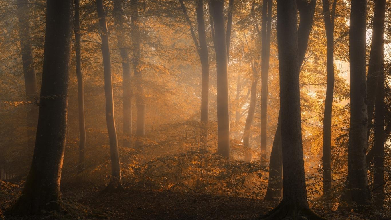 Foggy Fall Wallpaper