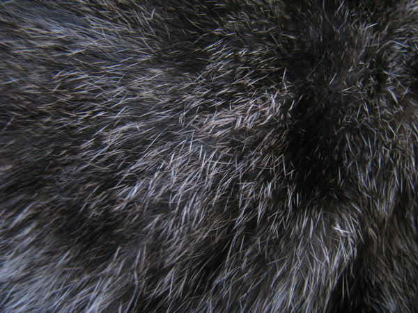 Free Animal Fur Texture For You