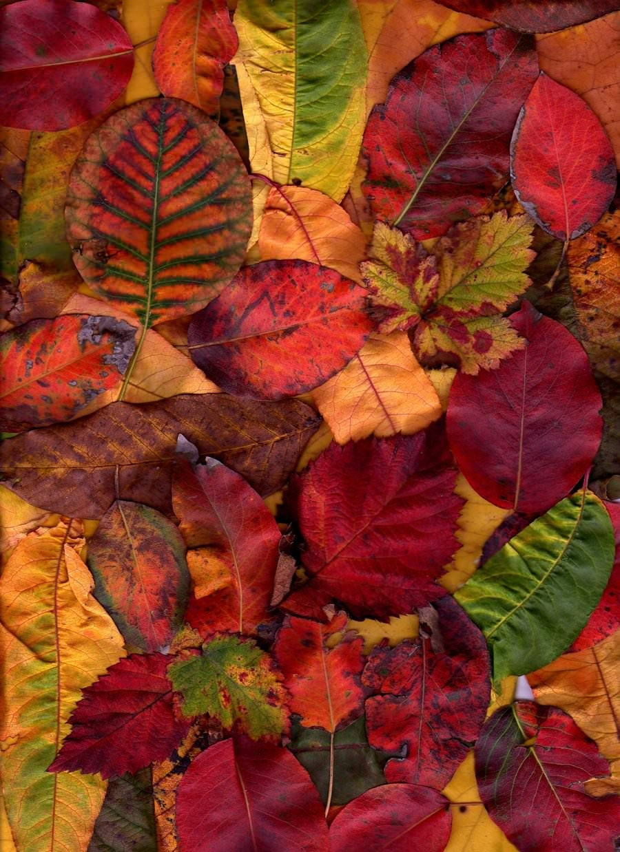 free autumn texture for download
