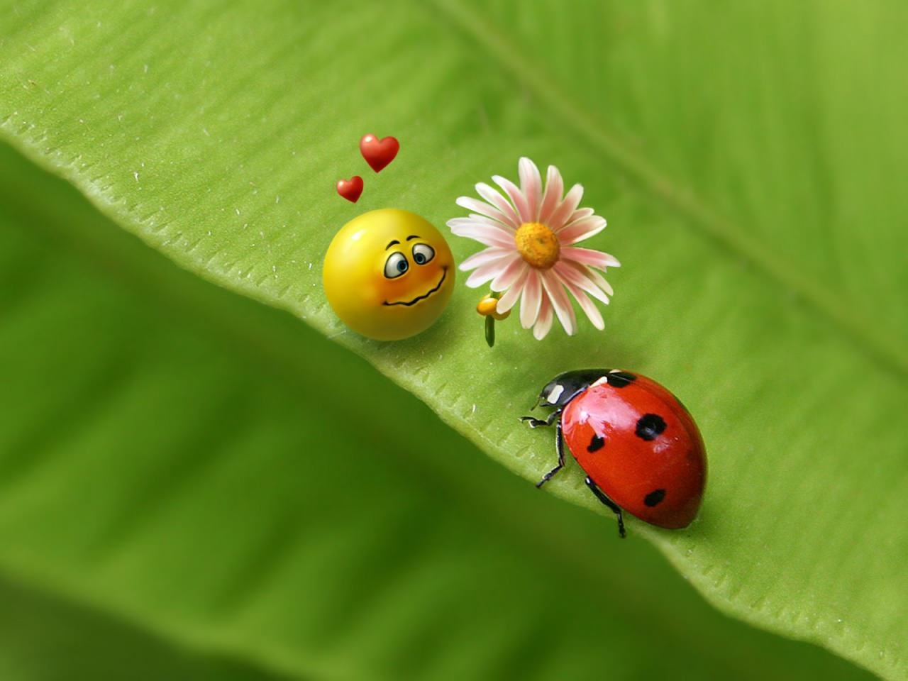 Free Ladybug Wallpaper