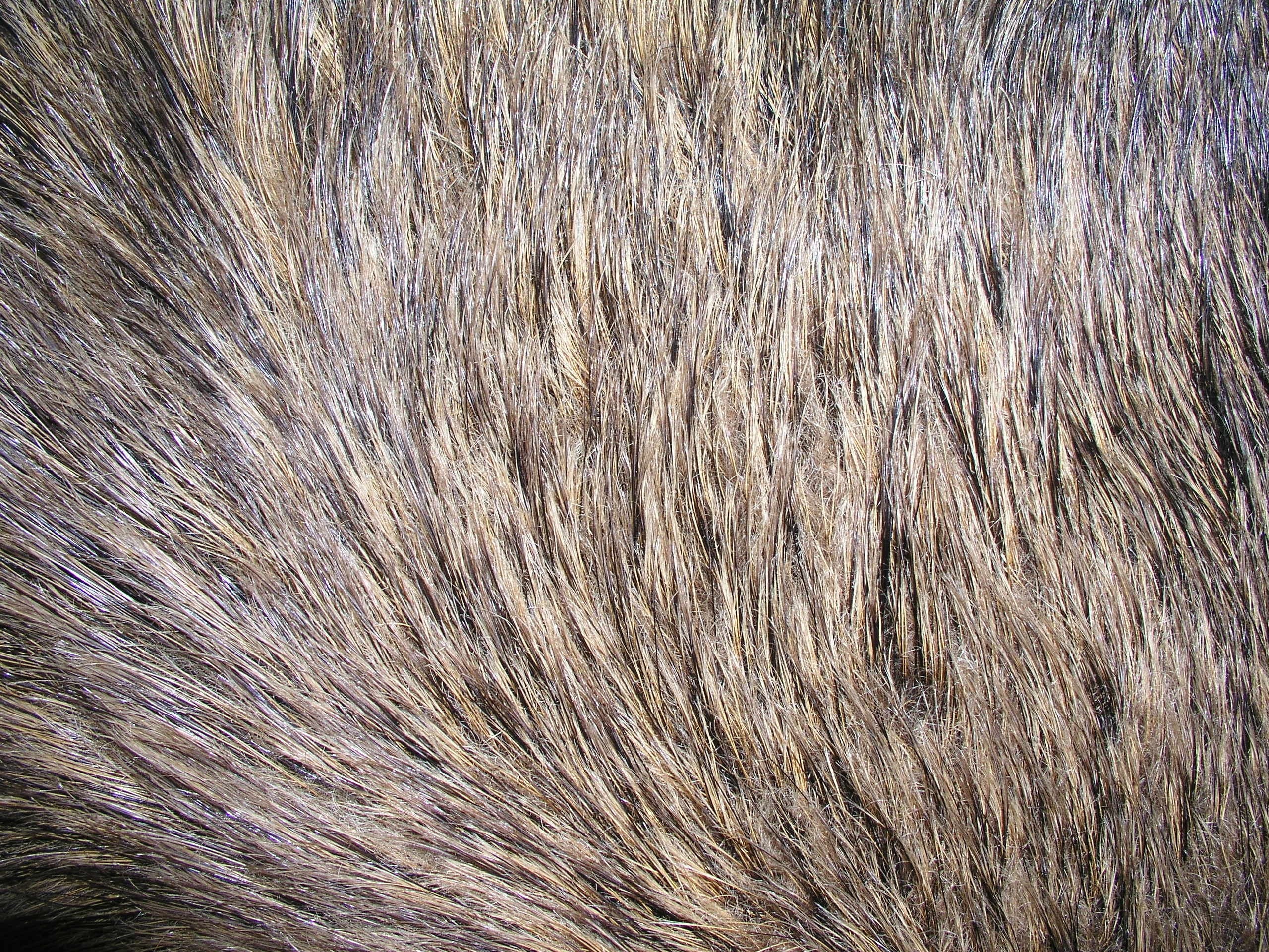 Free Sheep Fur Texture