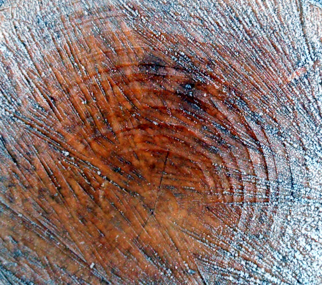 Frosted Tree Rings Texture