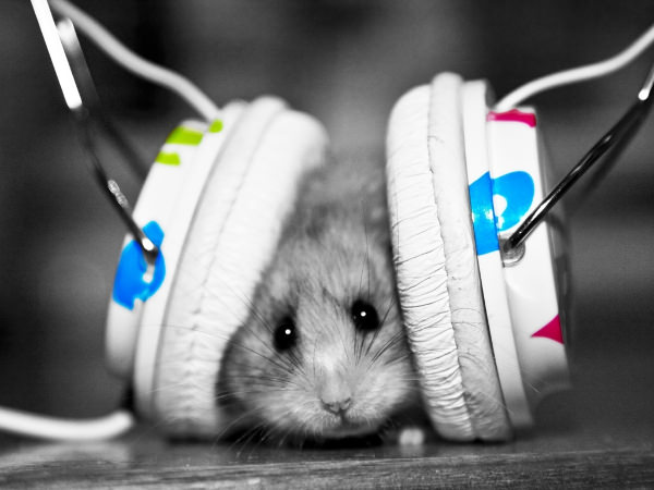 Funny Little Hamster Listening Music