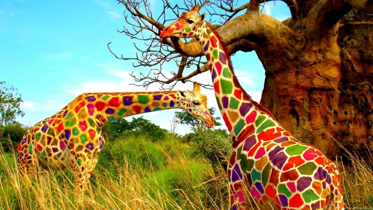 Giraffe Colorful Wallpaper