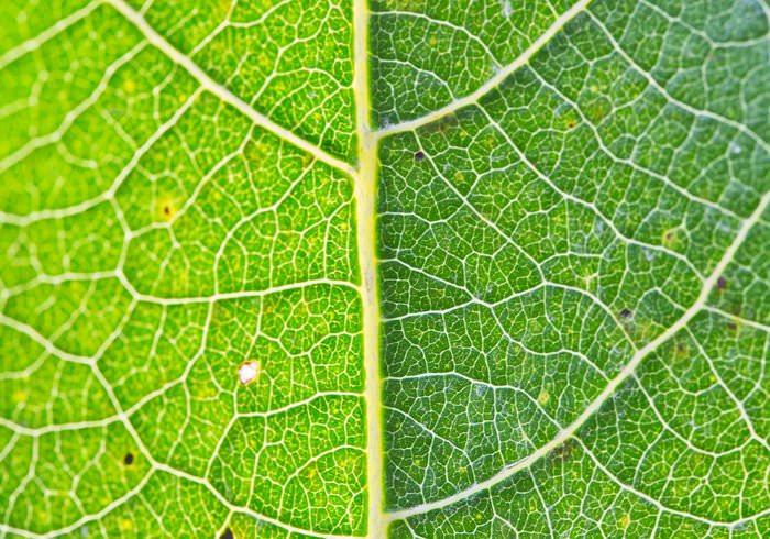 GreN leaf texture