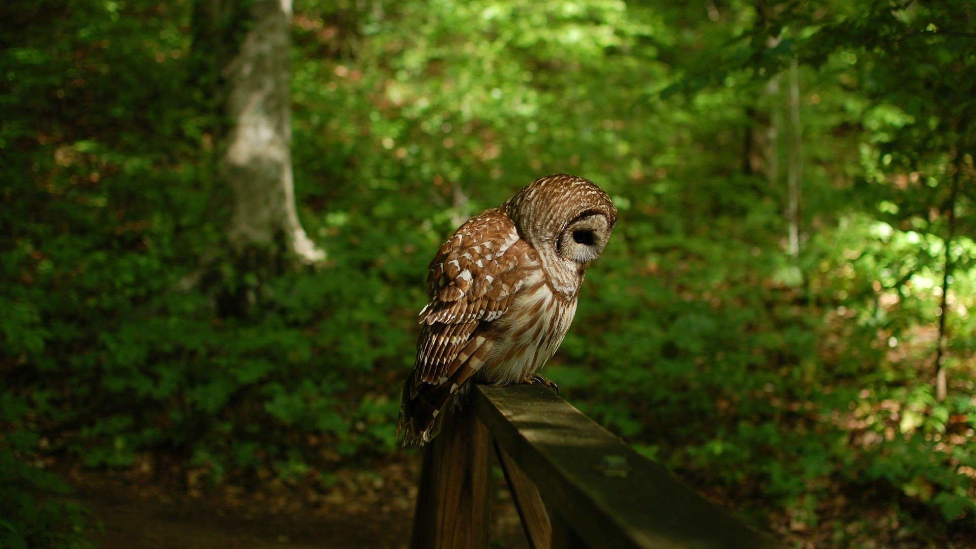 Green Shade Owl Wallpaper