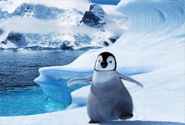 Happy Feet Penguin Wallpaper