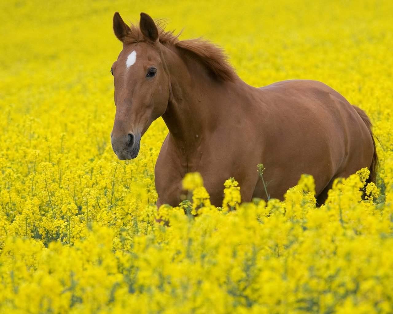 Hd Horse Wallpaper