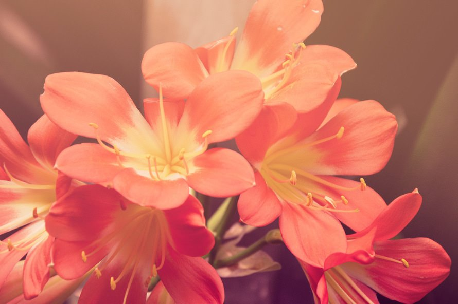 High Quality Flower Background
