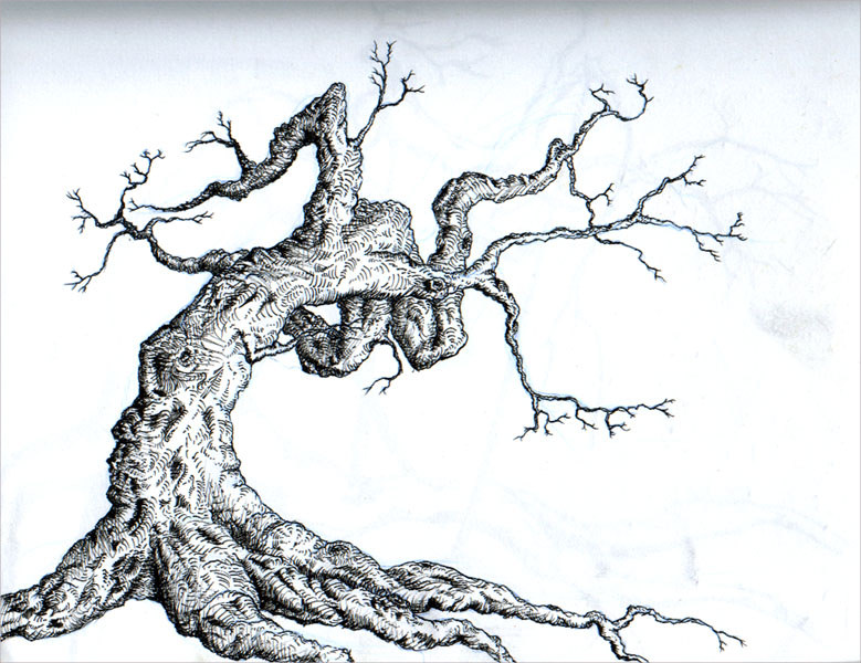 LAughing Tree Drawing