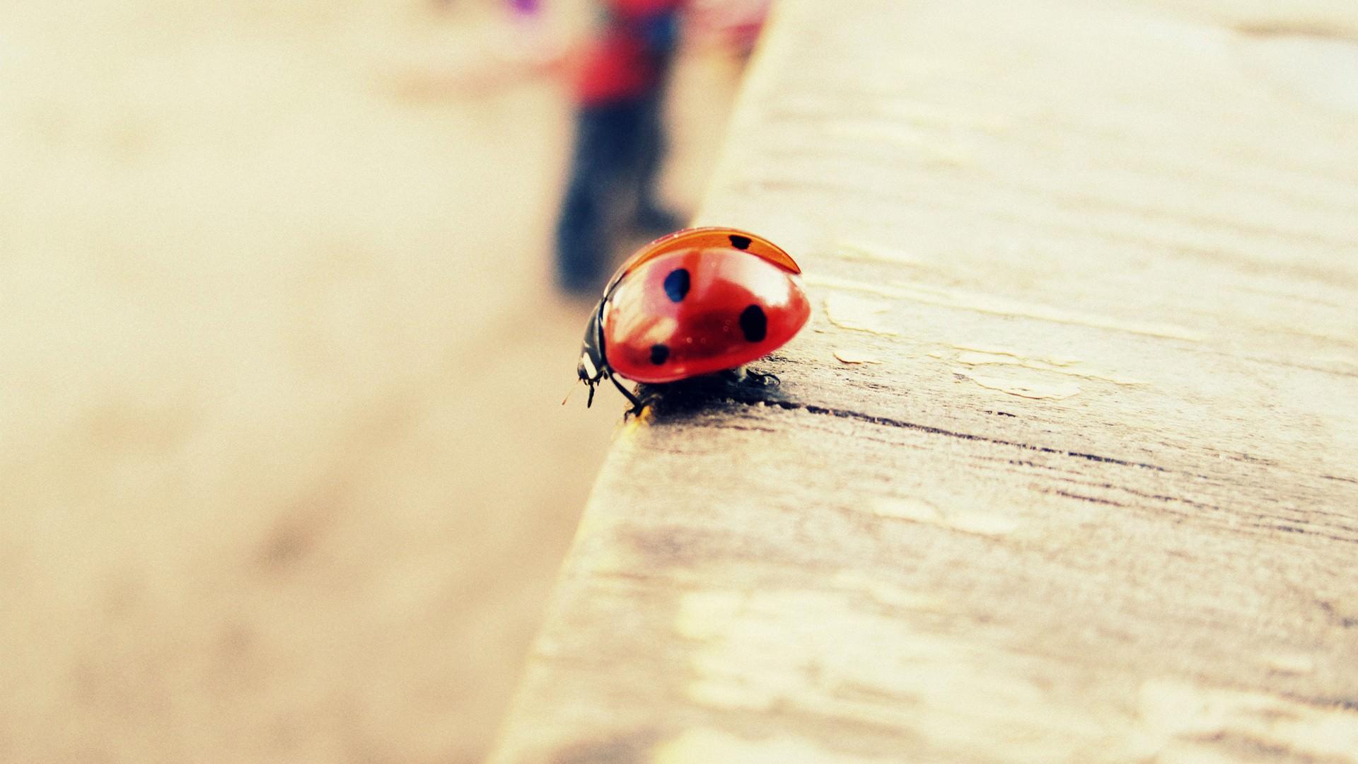 Ladybug Wallpaper For Free