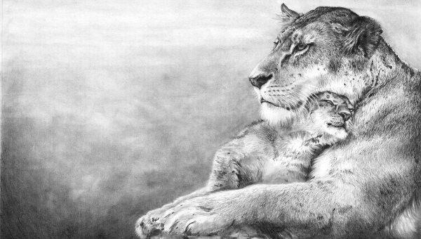 17 wonderful lion drawings